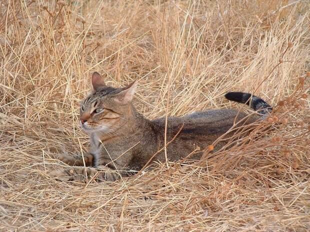Отдыхает в траве кошка только днём. Ночью животное прячется в норах, которые отнимает у прибрежной фауны.