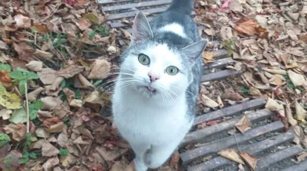 Брошенный на дачах кот бежал за машиной девушки, которая накормила его хлебом… Он умолял забрать его с собой