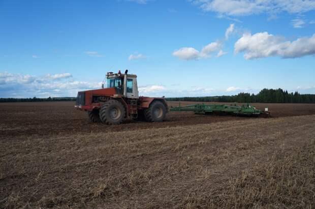 Солнечная осень в Удмуртии даст возможность получить хороший урожай озимых