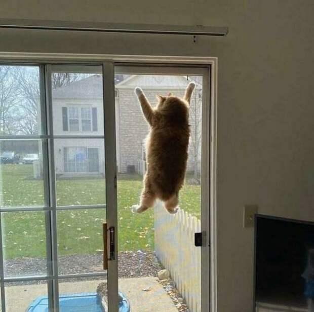 Смешные котики, которые чудят как не в себя