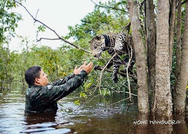 Солдаты увидели тонущего ягуара и не раздумывая бросились в воду