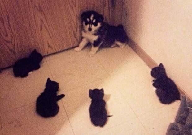 15 котов-разбойников, которых боятся даже собаки!