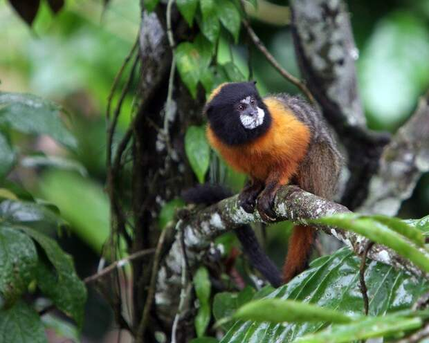 Amazonas34 Большое фотопутешествие по лесам Амазонки