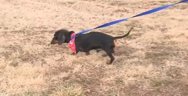 Связанная и брошенная на верную гибель собака не могла позвать на помощь и даже убежать