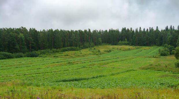 Россиянам раздадут земельные участки по упрощенной процедуре и в короткие сроки