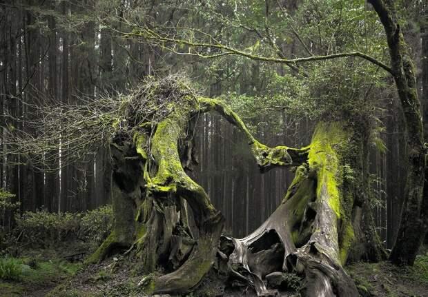 """""""Странные деревья"""" . Реальная история, которая до сих пор остается тайной."""