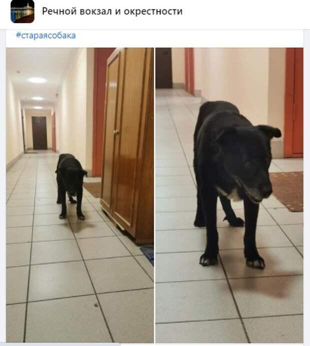 Слепой пес с Беломорской гуляет сам по себе