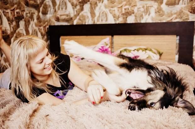 Брошенный пес не отходил от ворот своего бывшего дома бездомный пес, дом, пес, собака