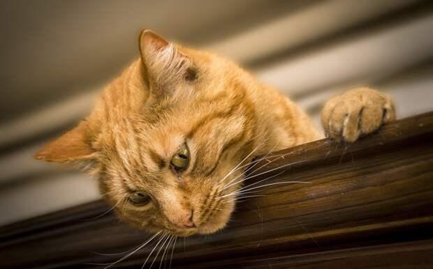 В Великобритании кот потерял GPS-трекер и удивил хозяина своими «перемещениями»