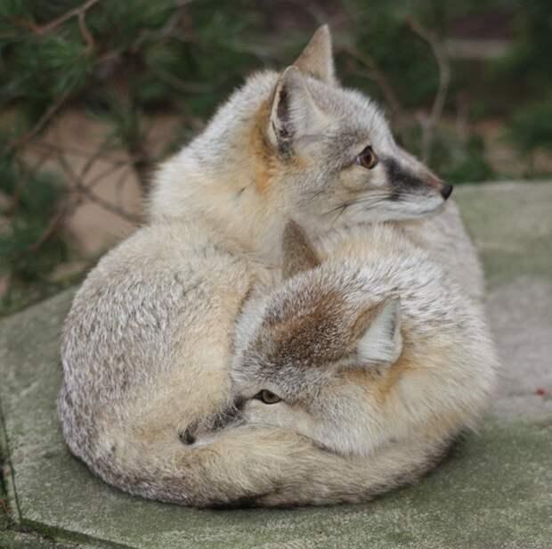 10 самых крепких семейных пар животного мира