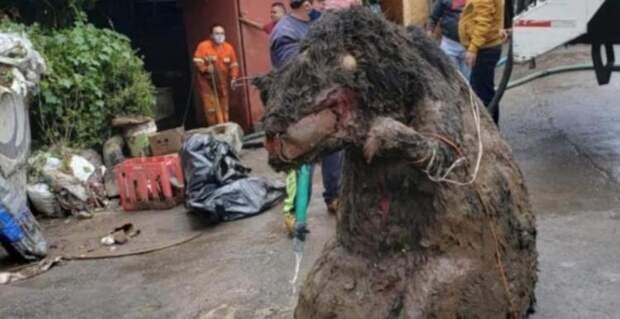 Крысу, размером с корову, нашли в Мехико при расчистке канализации