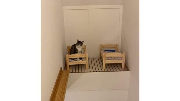 Девушка сделала для своих кошек маленькую спальню. Теперь им все завидуют