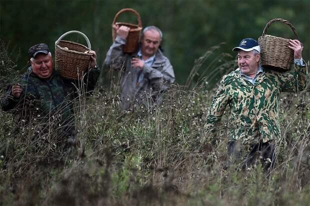 Минприроды опровергло ограничения на сбор грибов и ягод