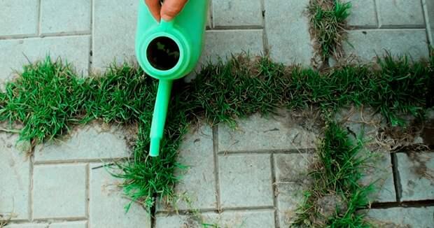 Травы на дорожках больше не будет: бюджетный суперметод, помогающий раз и навсегда