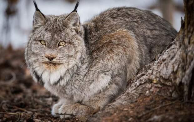 Старушка взяла домой бездомную кошку, но пользователи Сети предупреждают ее о возможной опасности