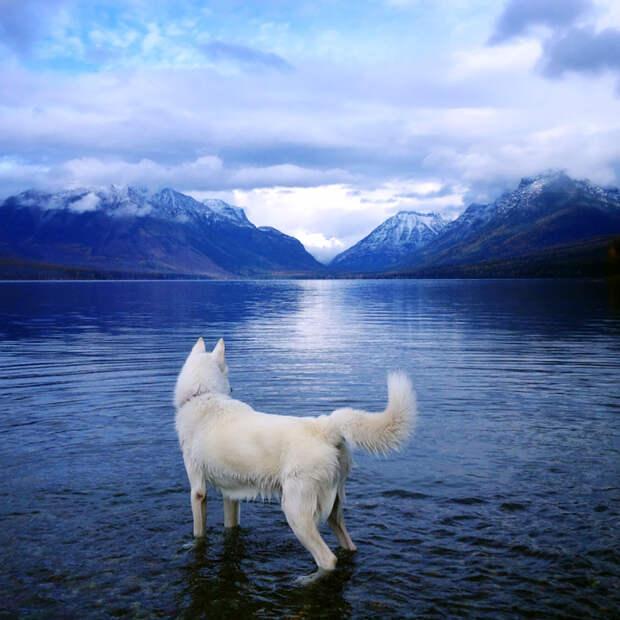 путешествие по США Джона Шторца и его собаки Вольфа (8)