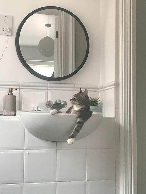 """6. """"Мой кот, когда думает, что никого нет дома"""" животные, забавно, забавные животные, кот, коты, кошки, приколы с животными, смешно"""