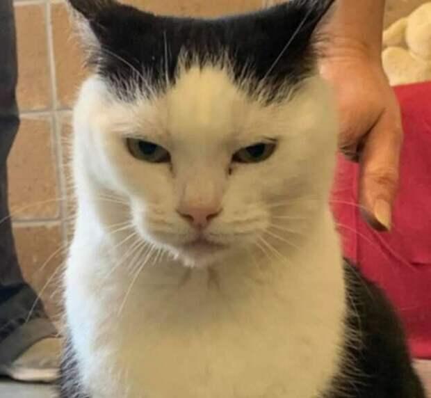 сердитая кошка