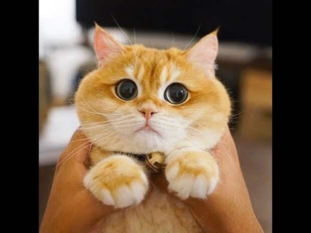 Смешные видео приколы про котов и собак | Домашние питомцы #1