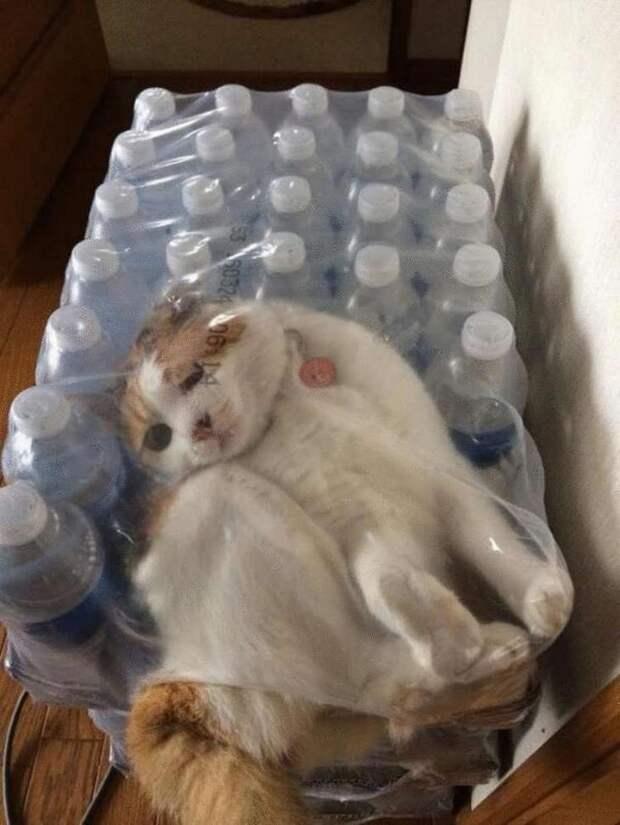 Коты с которыми не соскучишься