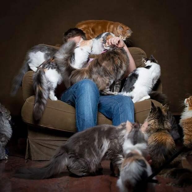 Любимчики домашние животные, животные, забавно, кошки, мило, мэйкуны, очаровательно, смешно