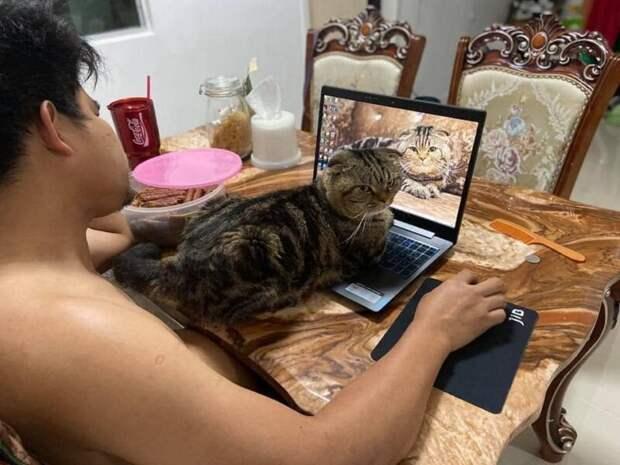 Удивительно обаятельный котяра «украл» у жены ее мужа и она показала это нафото