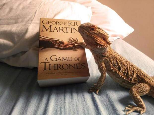 С симпатичным бородатым драконом, по прозвищу Прингл, точно не соскучишься