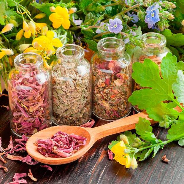 Работа с лекарственными растениями