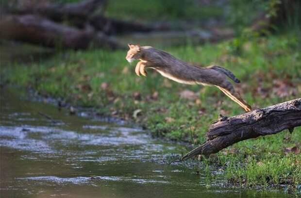 Первый день лета: не хочу ничего решать, хочу прыгать в речку и есть шашлыки.