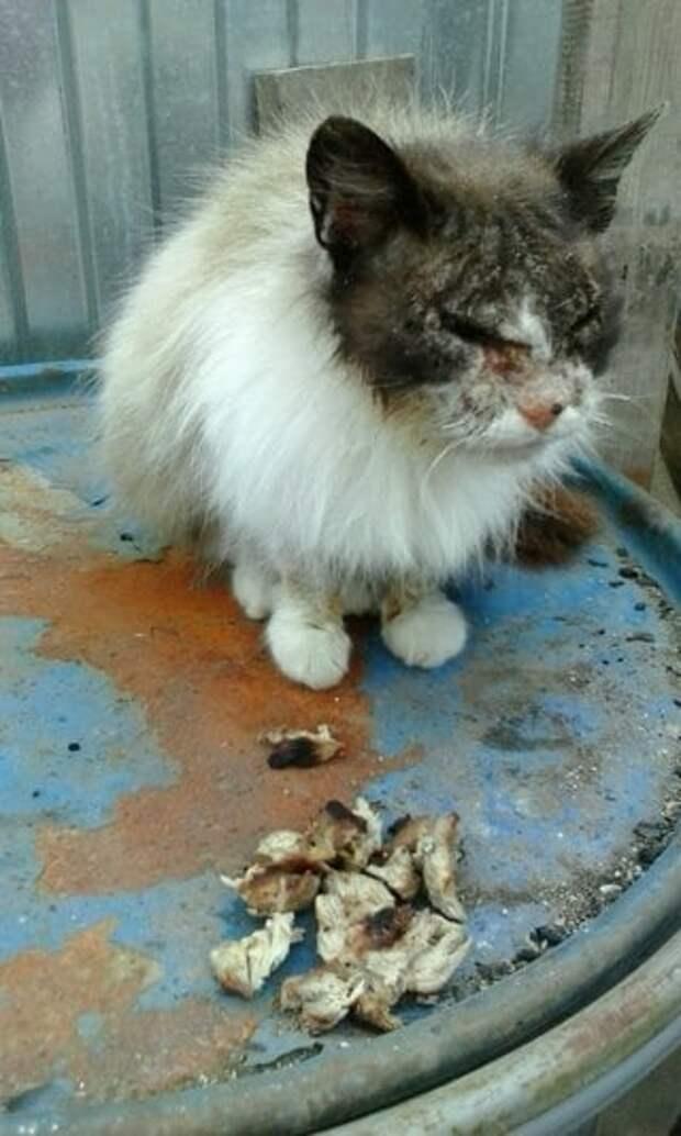 Увязая в грязи по колено, девушка шла, чтобы спасти пострадавшую кошку