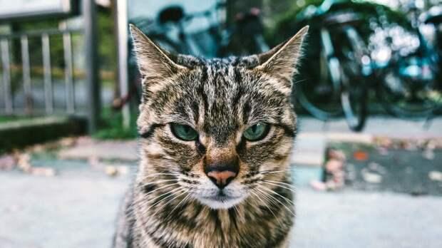 Незнакомый кот несколько дней ходил под окном, а потом обратился ко мне по имени