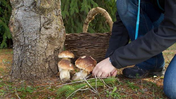 Права россиян на сбор грибов и ягод разъяснили в Минприроды