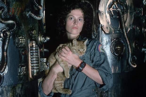 кот из чужой сериал