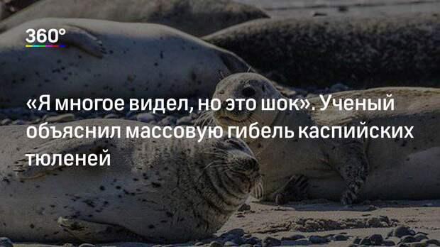 «Я многое видел, но это шок». Ученый объяснил массовую гибель каспийских тюленей