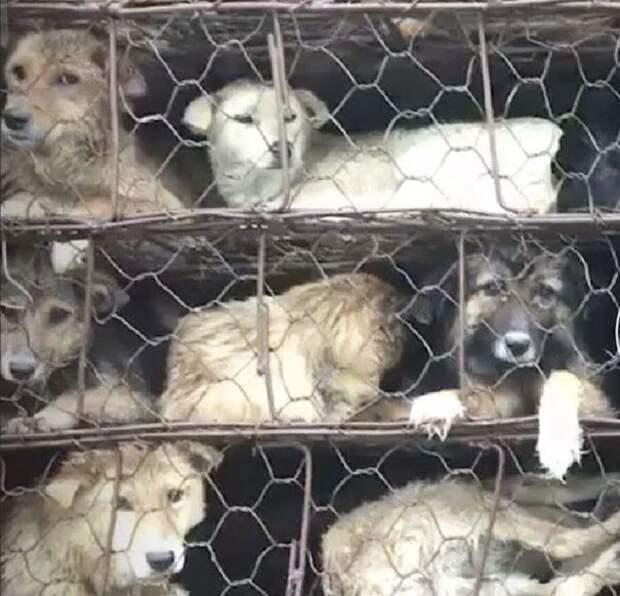 Они спасли больше тысячи собак