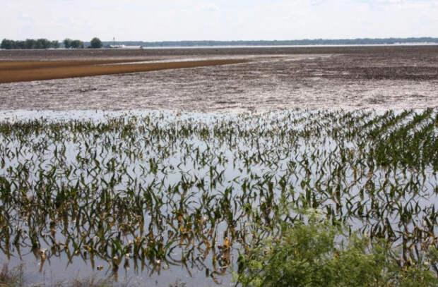 Фермеры жалуются на недавние дожди