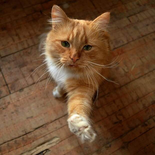 Пара студентов из Серпухова нашла на дороге искалеченного кота, а дальше – 7 месяцев борьбы за жизнь… кот, Спасение, Картинки, доброта, длиннопост, спасение животных
