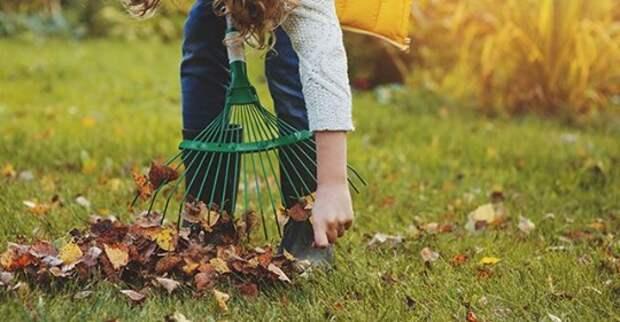 Что делать осенью с листвой?