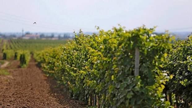 Потребление вина в мире достигло минимального значения с 2002 года