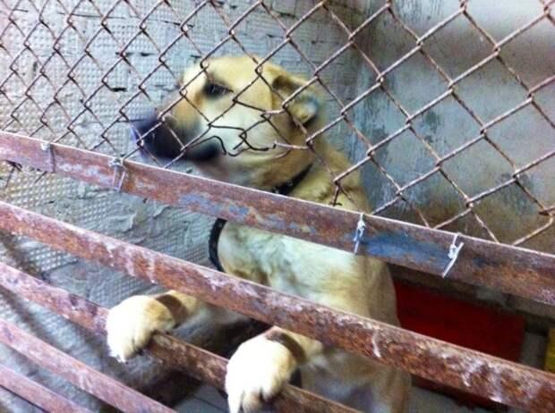 Волонтеры были в ужасе, когда узнали, что хозяйка хочет сделать в бывшеприютской собакой пес, собака, черный пес