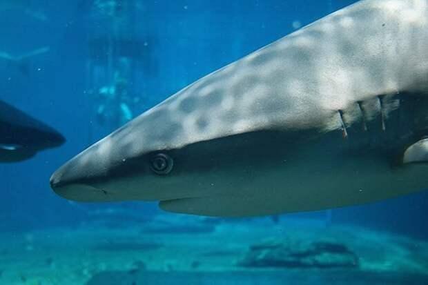 Это все у них в голове акулы, факты, хищники