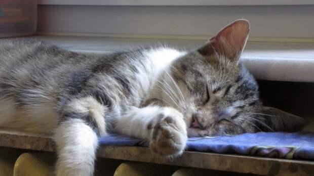 Пожилая москвичка угрожала самоубийством после массовой расправы над домашними котами