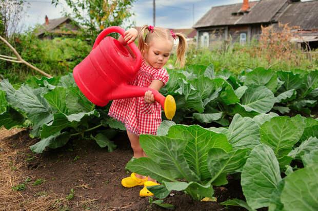 Как сохранить капусту до весны!