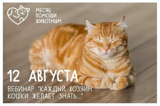 Бесплатный вебинар «Каждый хозяин кошки желает знать…»