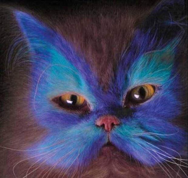 Если вам не нравится цвет вашей кошки