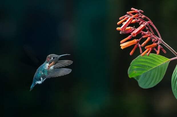 Маленькие, но иногда удаленькие: самые миниатюрные животные планеты