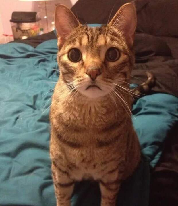 Пожилой кот рыдает каждый раз, когда с него снимают свитер