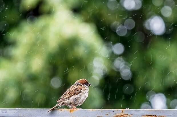 Пятница в Удмуртии будет дождливой