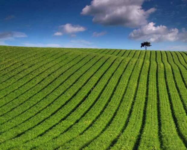 В глобальном масштабе органическое земледелие на экологию вряд ли повлияет. /Фото: farmtek.files.wordpress.com