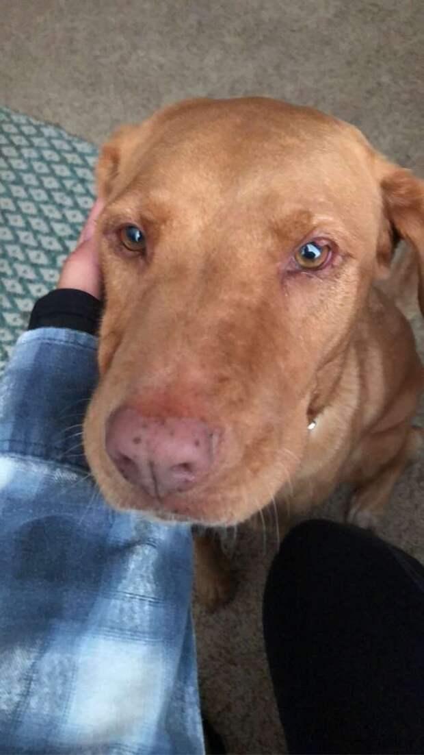Собака так грустно смотрела на хозяина, что ему пришлось быстро простить ее за шалость